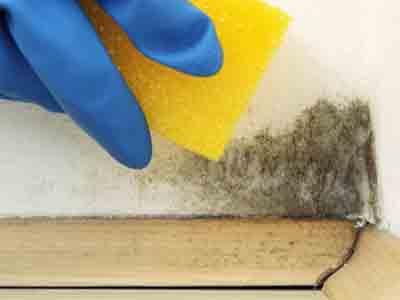 Como eliminar manchas de humedad de la pared