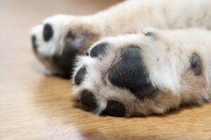 Cómo limpiar el alquitrán de las patas de un perro